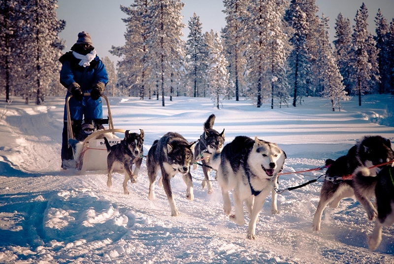 Hetta-Huskies-mushing-husky-safaris-Lapland-Finland